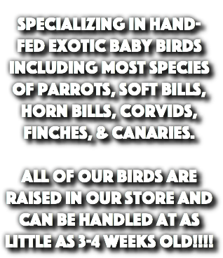 Specializing in Hand-Fed Exotic baby birds including most species of Parrots, Soft Bills, Horn Bills, Corvids, Finches, & Canaries. All of our birds are raised in our store and can be handled at as little as 3-4 weeks old!!!!